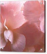 Pink Begonia Floral Acrylic Print
