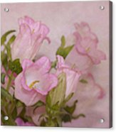 Pink Bell Flowers Acrylic Print