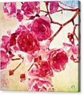 Pink Blossom - Watercolor Edition Acrylic Print