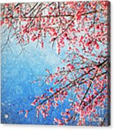 Pink Blossom Acrylic Print by Setsiri Silapasuwanchai