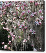 Pink Blossoms And Gray Moss Acrylic Print