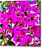 Pink Bouganvilla Acrylic Print