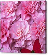 Pink Camilla's And Red Butterfly Acrylic Print by Garry Gay