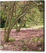 Pink Carpet In The Forrest Acrylic Print