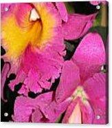 Pink Cattleya Orchid Acrylic Print