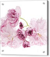 Pink Cherry Blossoms Acrylic Print
