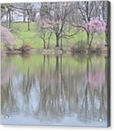 Pink Cherry Reflections Acrylic Print