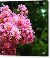 Pink Contrast Acrylic Print
