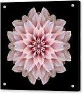 Pink Dahlia Flower Mandala Acrylic Print by David J Bookbinder