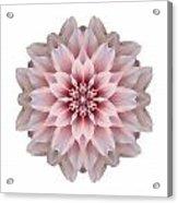 Pink Dahlia I Flower Mandala White Acrylic Print