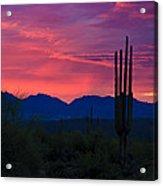 Pink Desert Skies  Acrylic Print