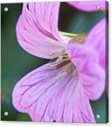 Pink Details Acrylic Print