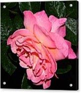 Pink Diamonds Acrylic Print