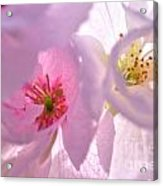Pink Dream Acrylic Print
