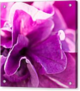 Pink - Featured 3 Acrylic Print