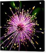 Pink Fireworks  Acrylic Print