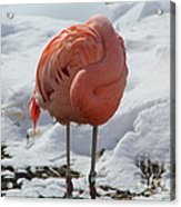Pink Flaming In Winter Acrylic Print