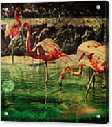 Pink Flamingos - Shangri-la Acrylic Print