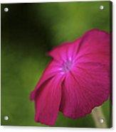 Pink - Floral Art Print Acrylic Print