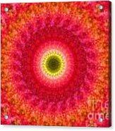 Pink Floral Pattern Acrylic Print
