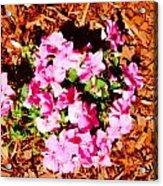 Pink Flower Garden Acrylic Print