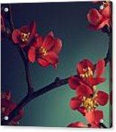 Pink Flower Acrylic Print by Jelena Jovanovic