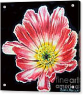 Pink Flower Painting Oil On Canvas Acrylic Print by Drinka Mercep