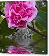 Pink Flower Reflection Acrylic Print
