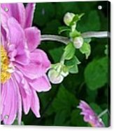 Pink Flower Shiver Acrylic Print