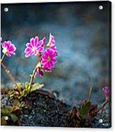 Pink Flower With Inkbrush Calligraphy Joyfulness Acrylic Print