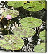 One Pink Water Lily With Lily Pads Acrylic Print