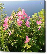 Pink Flowers By The Lake Acrylic Print
