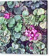 Pink Flowers Painting Acrylic Print