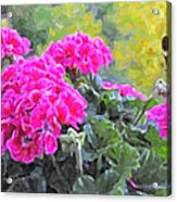 Pink Geraniums And Butterfly Acrylic Print