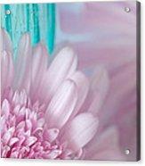 Pink Gerber Daisy Acrylic Print