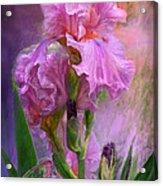 Pink Goddess Acrylic Print
