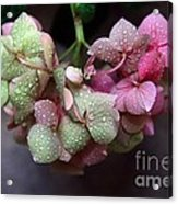 Pink Green And Rain Acrylic Print