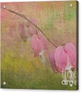 Pink Hearts Acrylic Print