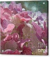 Pink Hydrangea Photoart I Acrylic Print