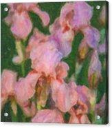 Pink Iris Family Acrylic Print