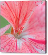 Pink Is Beautiful Acrylic Print