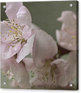 Pink Is The Color Of Happiness Acrylic Print
