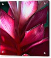 Pink Journey Acrylic Print