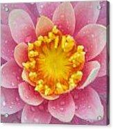 Pink Acrylic Print by Karen Walzer