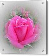 Pink Knockout Beauty Acrylic Print