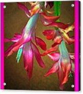 Pink Ladies Dancing Get Well Soon Acrylic Print