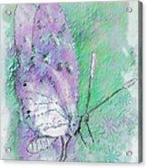 Pink Lady Acrylic Print by Jill Balsam