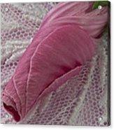 Pink Lavatera Bud Macro Acrylic Print