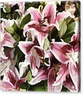 Pink Lilies I Acrylic Print