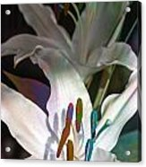 Pink Lily Dance Acrylic Print